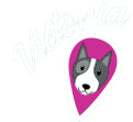 Vancouver Dog Teeth Cleaning - Sedation Free Clinic Victoria