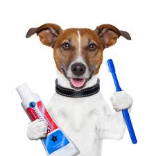 Dog Teeth Cleaning Vancouver