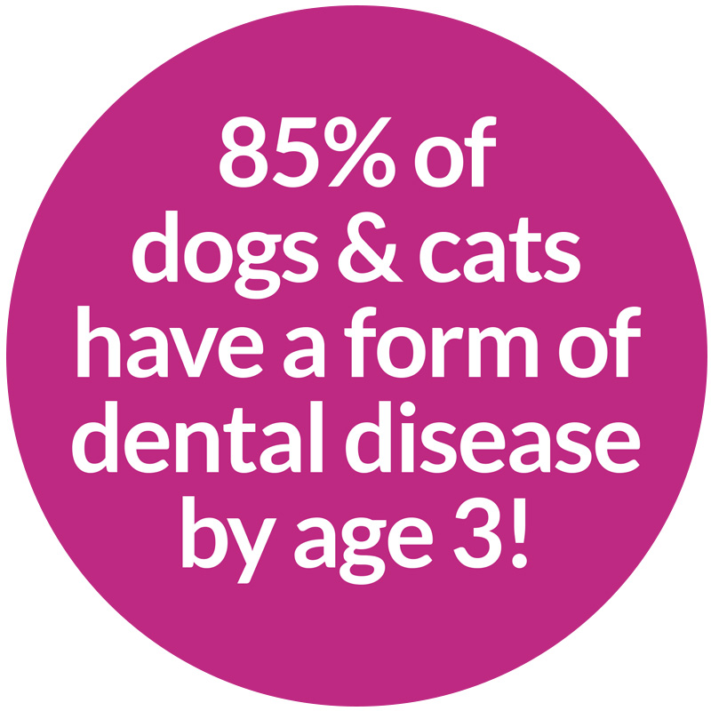 dogs and cats have a form of dental disease by age 3