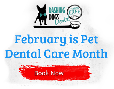 Vancouver Dog Teeth Cleaning - February is pet dental care month - Book an appointment
